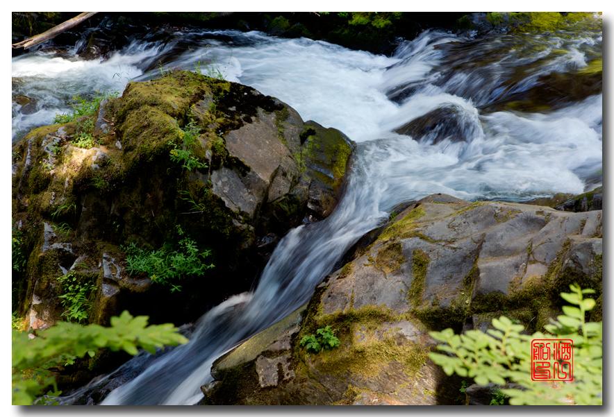 《酒一船》摄影:奥林匹克国家公园的温带雨林_图1-21
