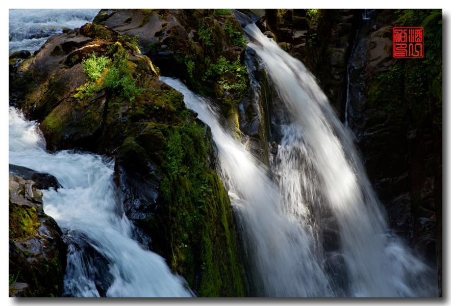 《酒一船》摄影:奥林匹克国家公园的温带雨林_图1-22