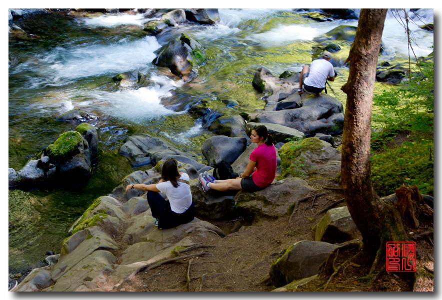 《酒一船》摄影:奥林匹克国家公园的温带雨林_图1-24