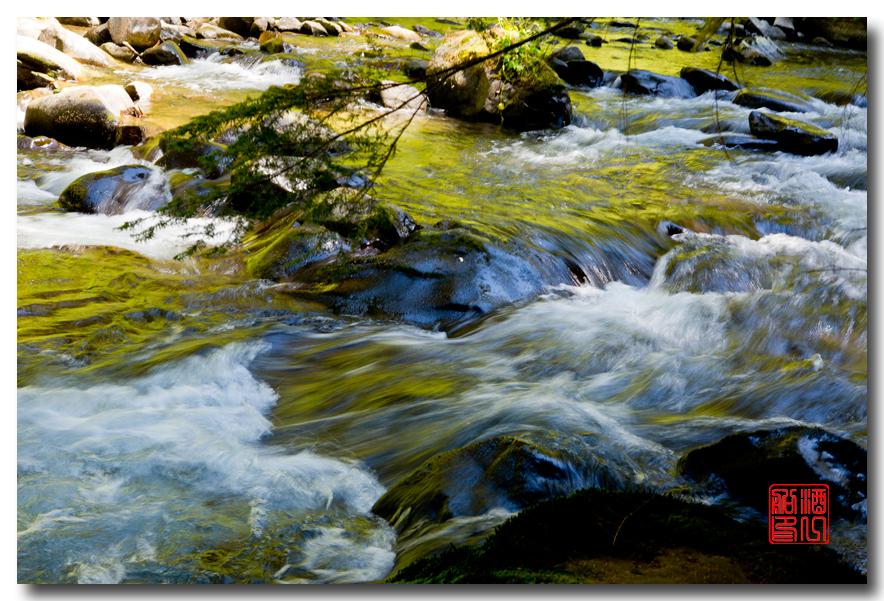 《酒一船》摄影:奥林匹克国家公园的温带雨林_图1-23