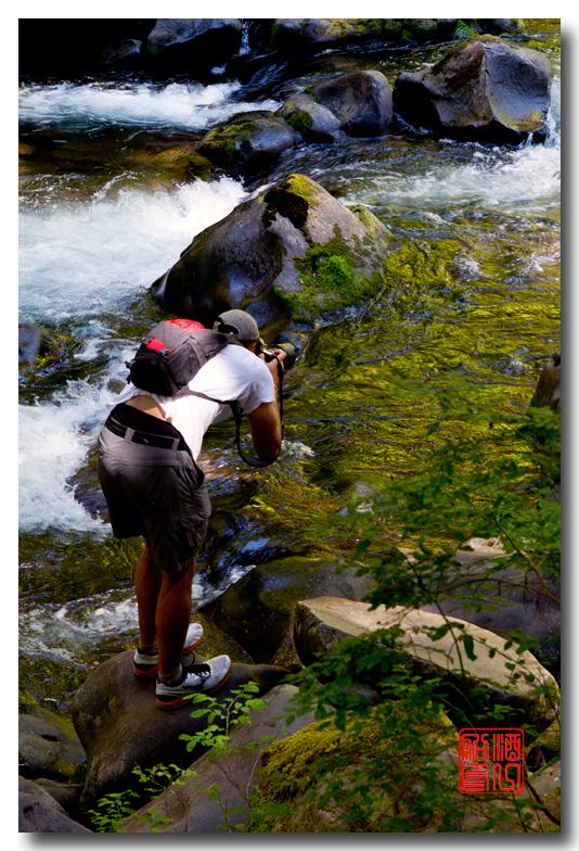 《酒一船》摄影:奥林匹克国家公园的温带雨林_图1-25