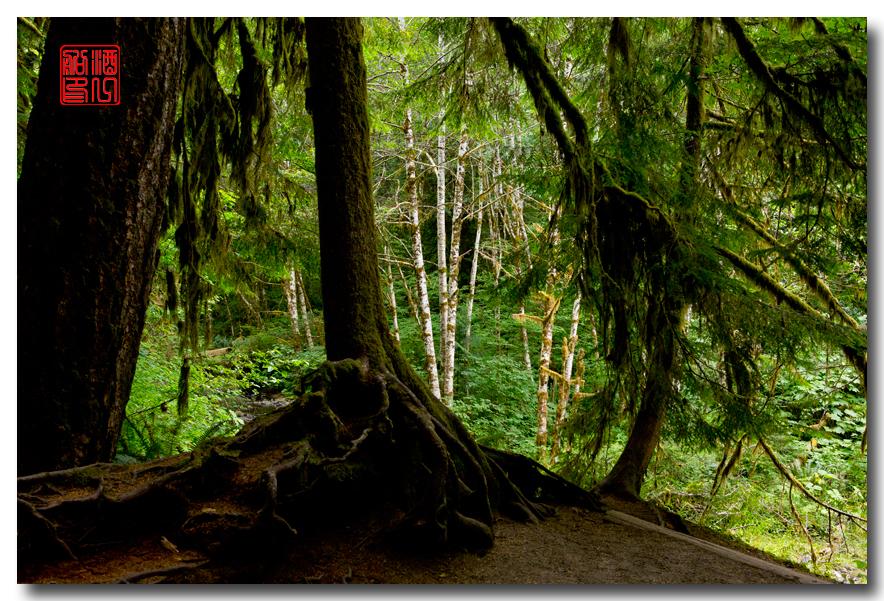 《酒一船》摄影:奥林匹克国家公园的温带雨林_图1-27