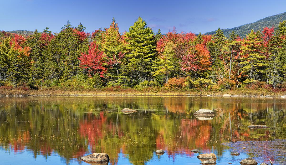秋天的枫叶2_图1-7