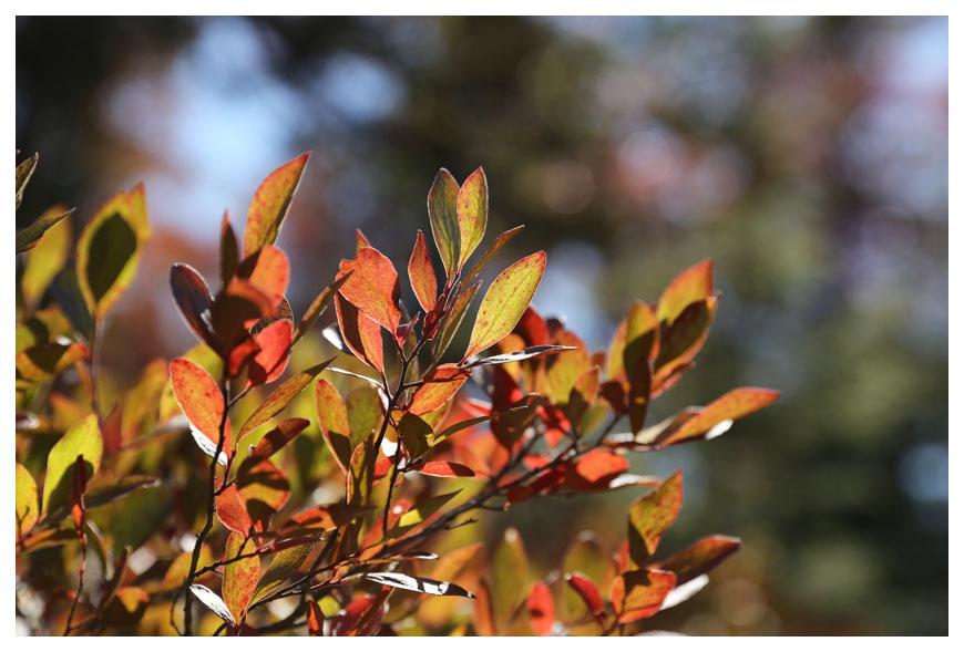 Minnewaska 州立公園秋色_图1-11