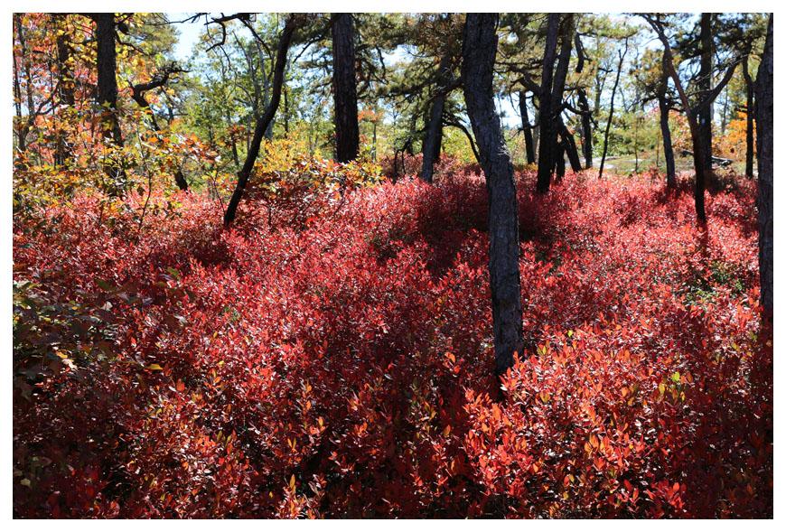 Minnewaska 州立公園秋色_图1-6