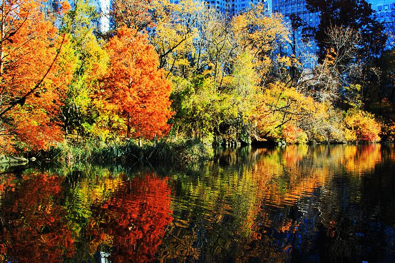 记录你秋天的色彩 纽约!纽约!_图1-3