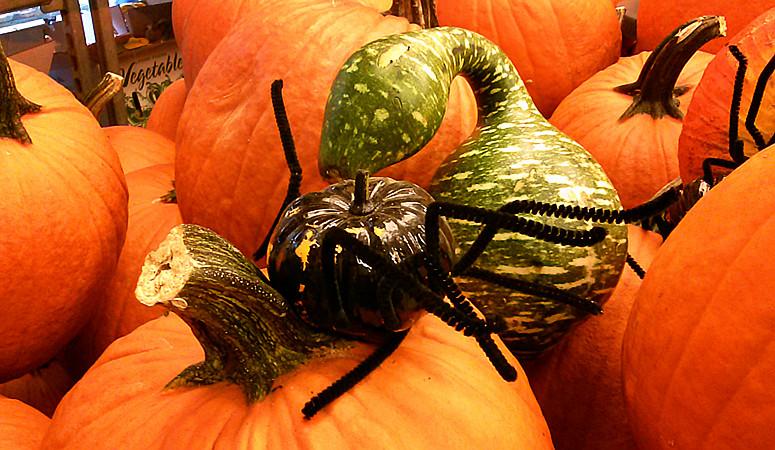 10月31日万圣节-拍蜘蛛与南瓜_图1-25
