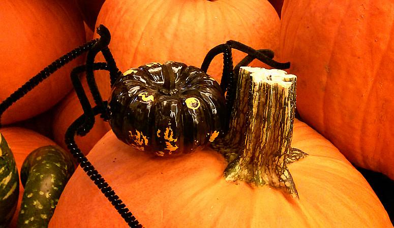 10月31日万圣节-拍蜘蛛与南瓜_图1-1