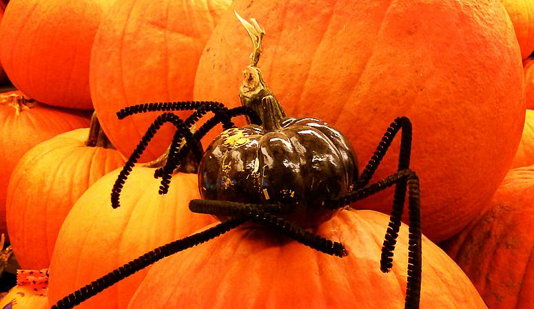 10月31日万圣节-拍蜘蛛与南瓜_图1-14
