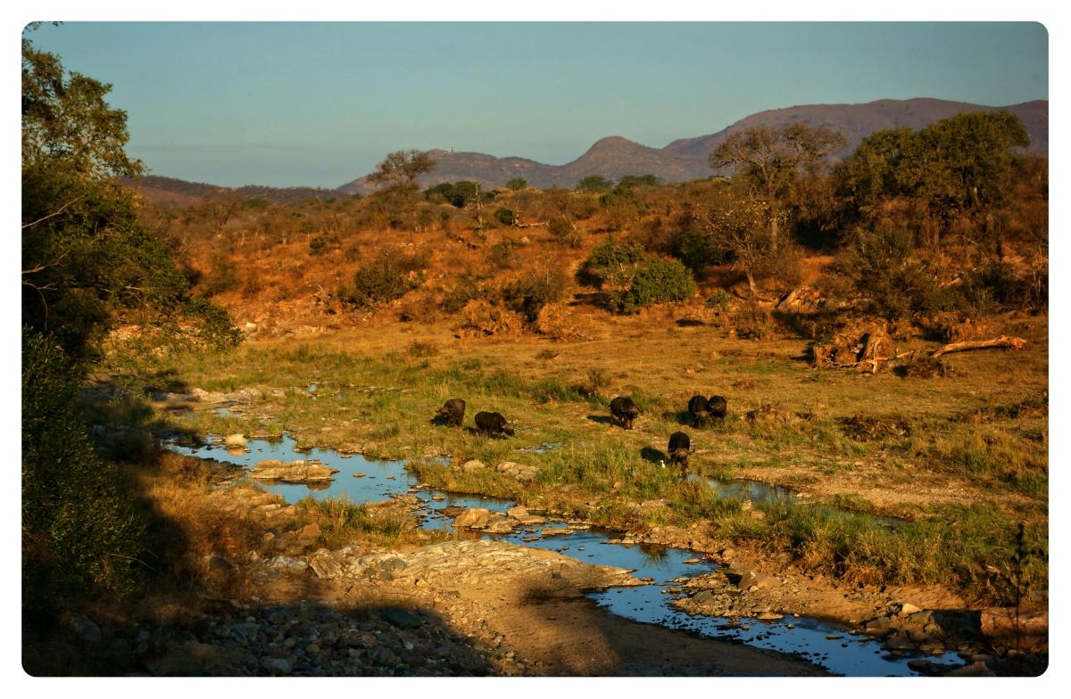 来自南非的相片【心想事成】_图1-7