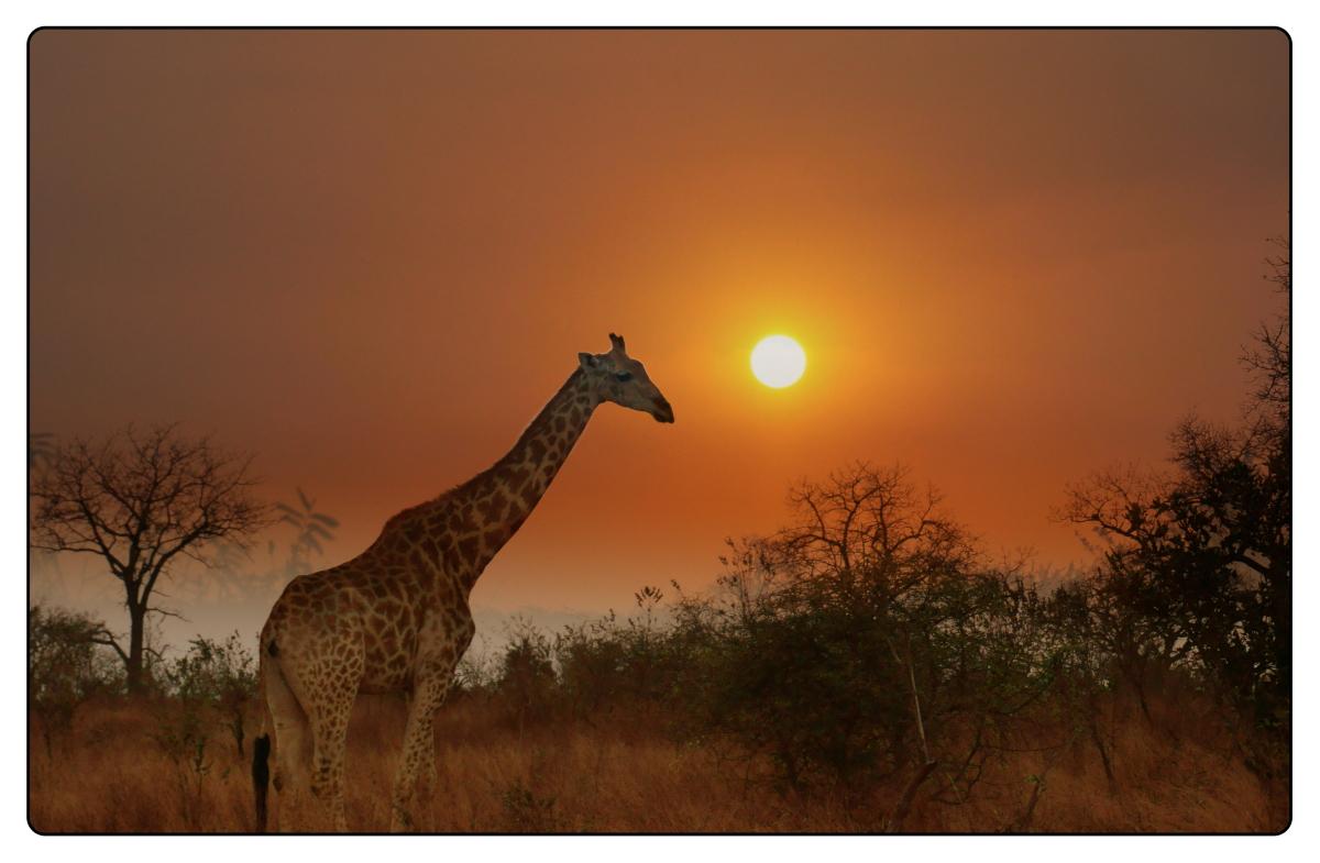 来自南非的相片【心想事成】_图1-14