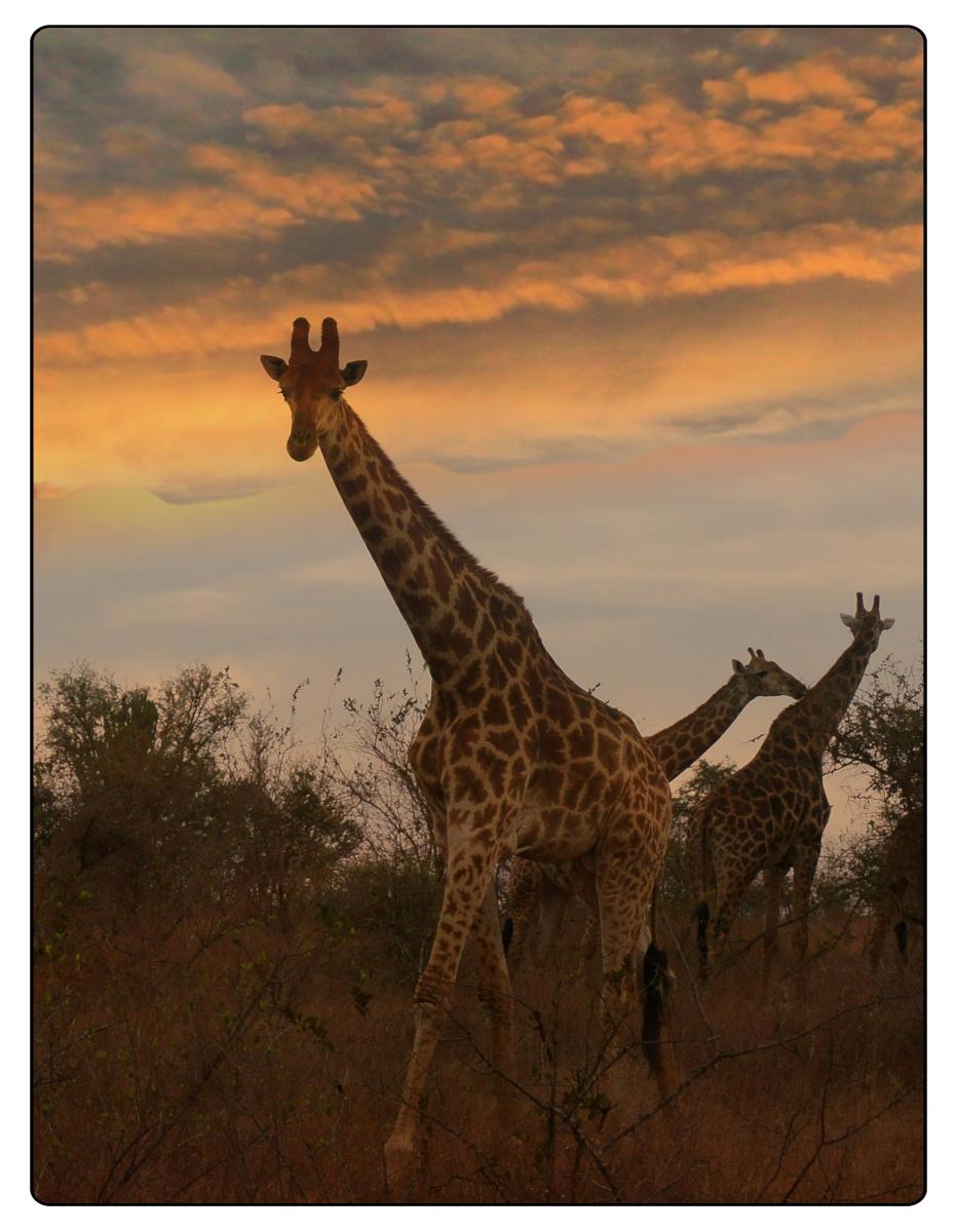 来自南非的相片【心想事成】_图1-11