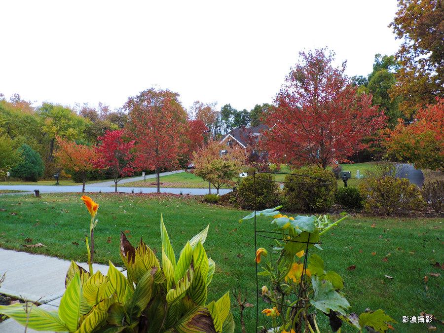 坐客紐約上州,賞深秋楓景