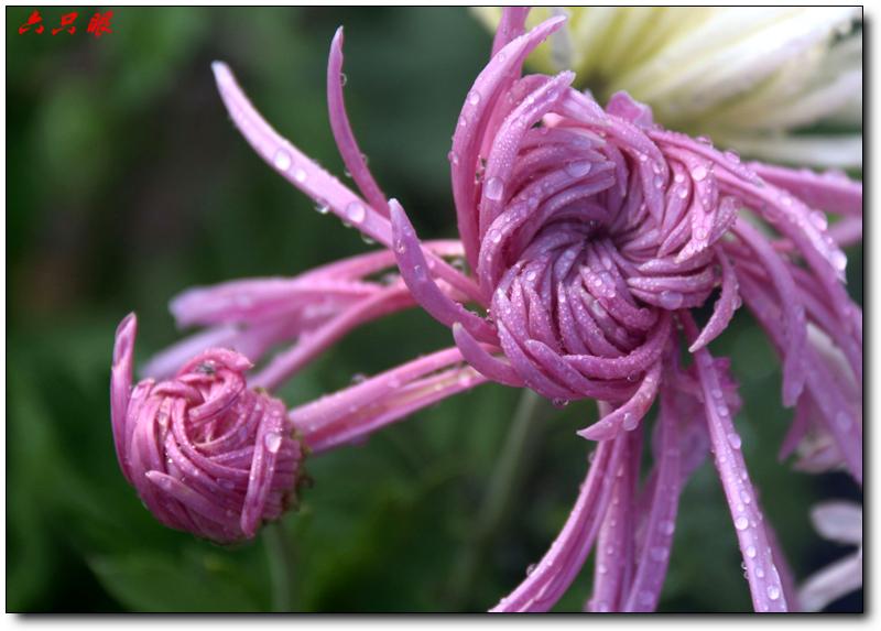 六只眼:秋菊和小鸟_图1-1