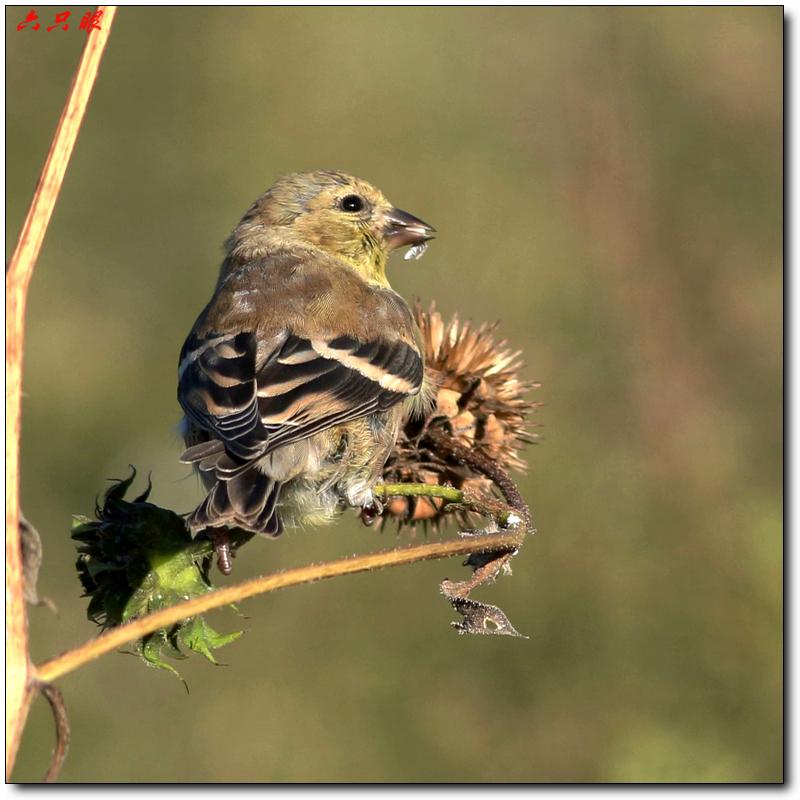 六只眼:秋菊和小鸟_图1-3