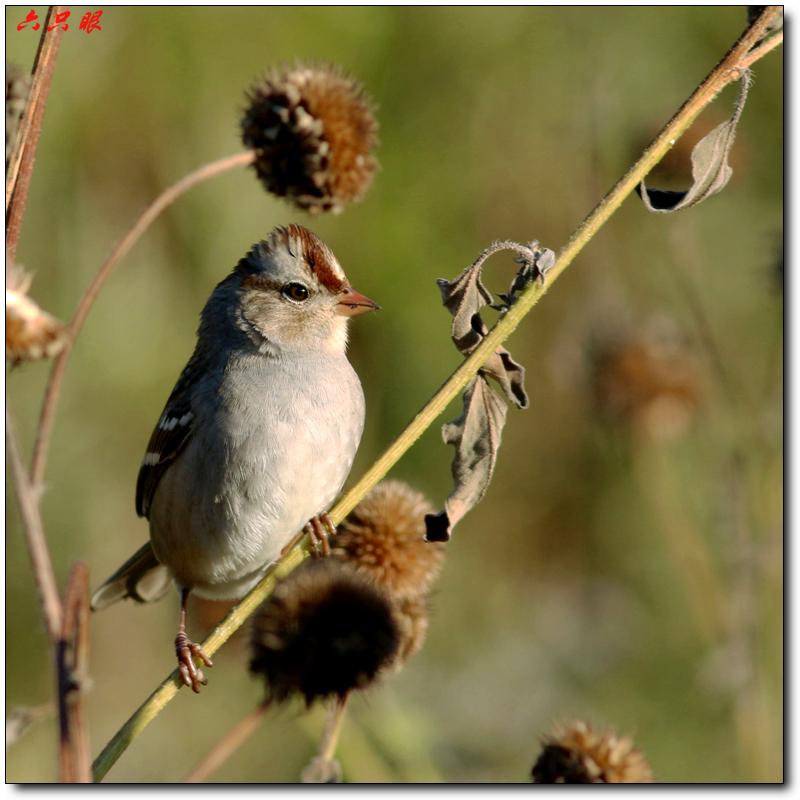 六只眼:秋菊和小鸟_图1-6