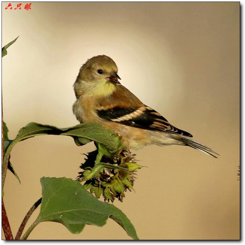 六只眼:秋菊和小鸟_图1-10
