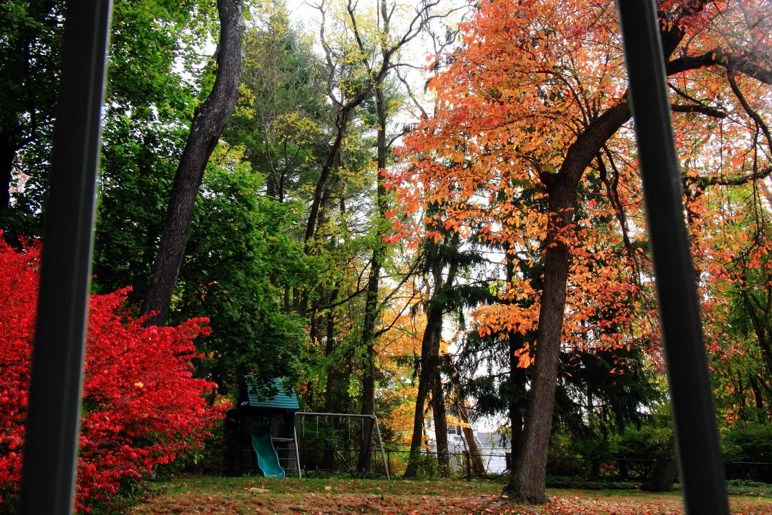 窗含满园多彩秋