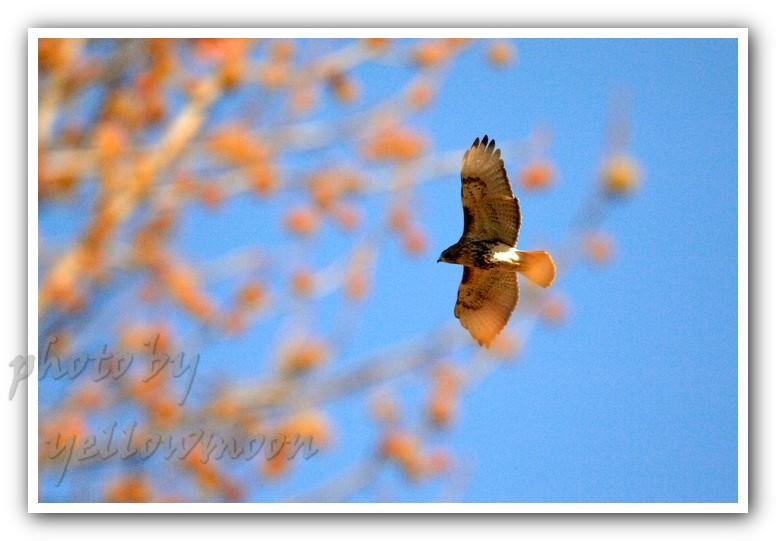 月影. 大鸟铁鸟和小鸟