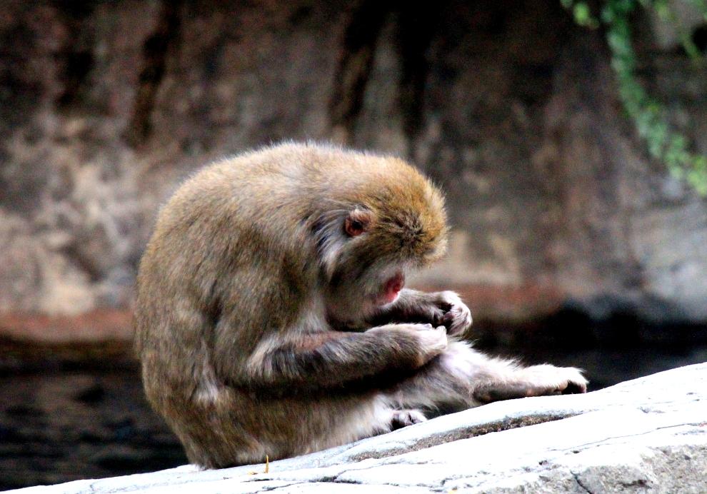 中央公园动物园里的猴子_图1-5