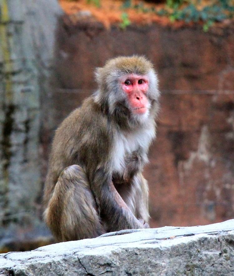 中央公园动物园里的猴子_图1-8