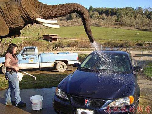 美国【大象\比基尼美女\机器】洗车的不同价格_图1-17