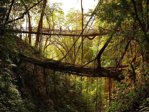 """印度奇特的""""活桥"""" 树根长成的天然桥梁_图1-2"""