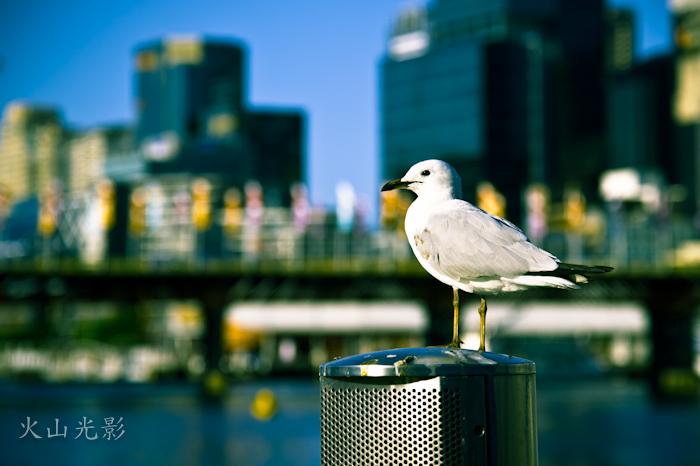 行走悉尼 (6)_图1-3