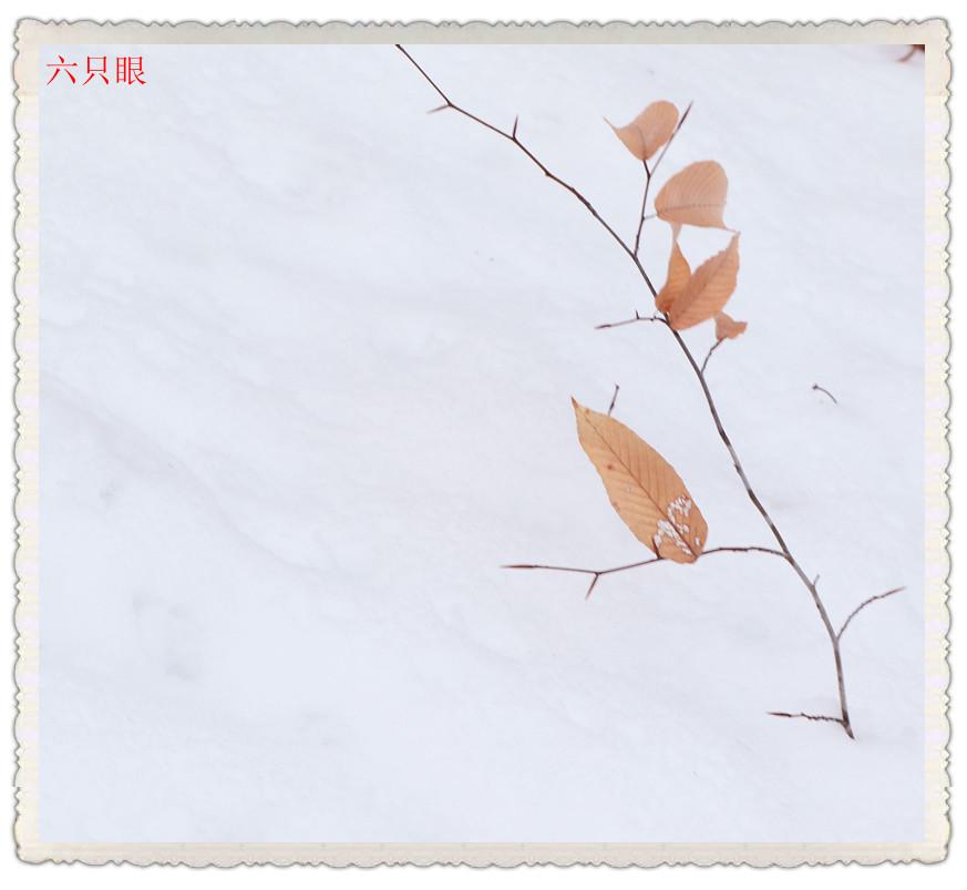 六只眼:雪中素描_图1-4