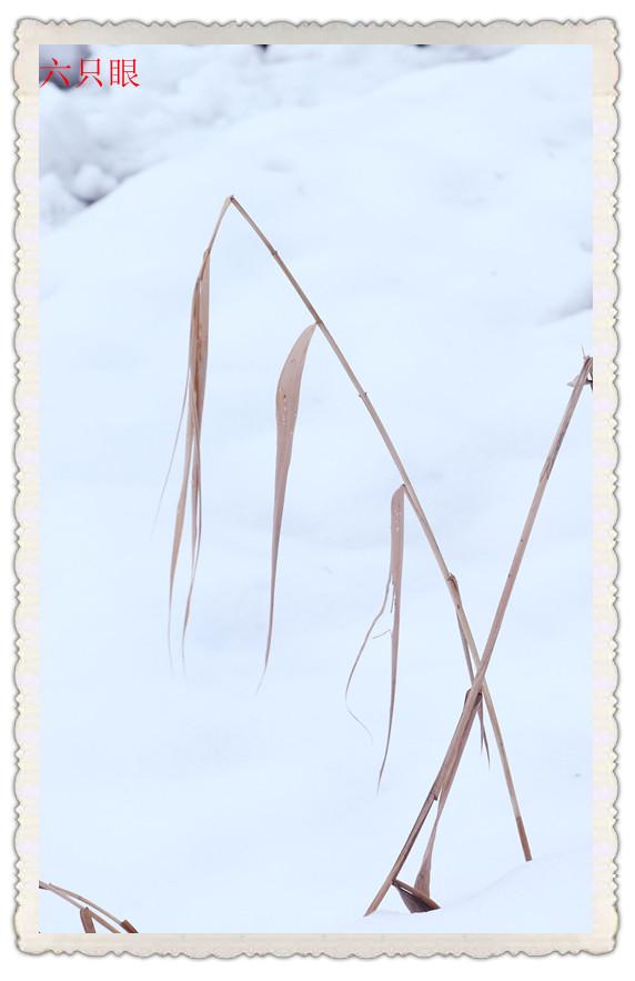 六只眼:雪中素描_图1-6