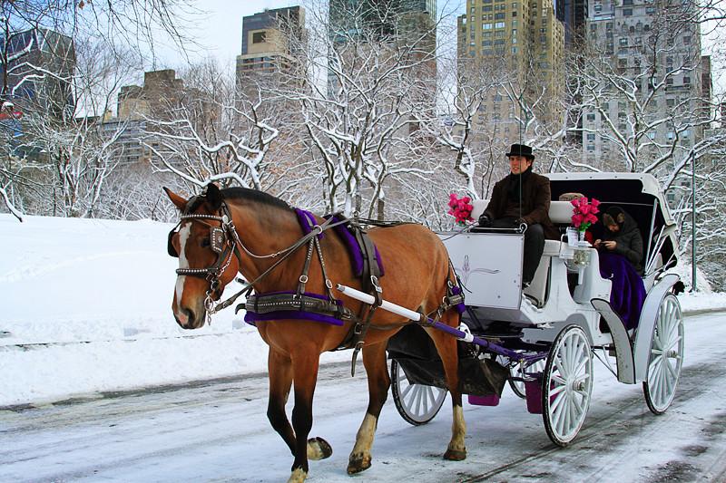 【Central Park】雪景最美