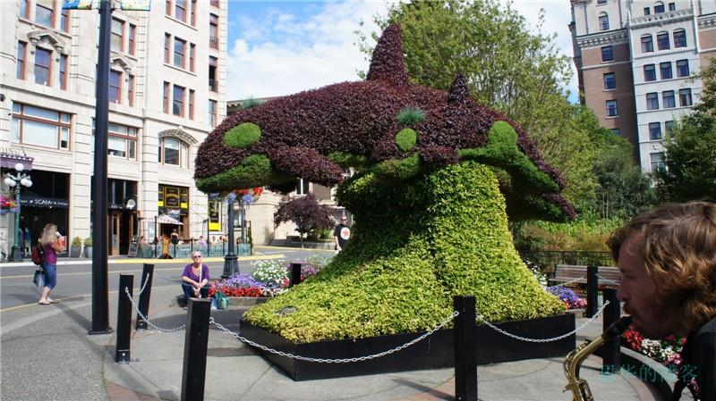 加拿大的花园城市---Victoria维多利亚_图1-31