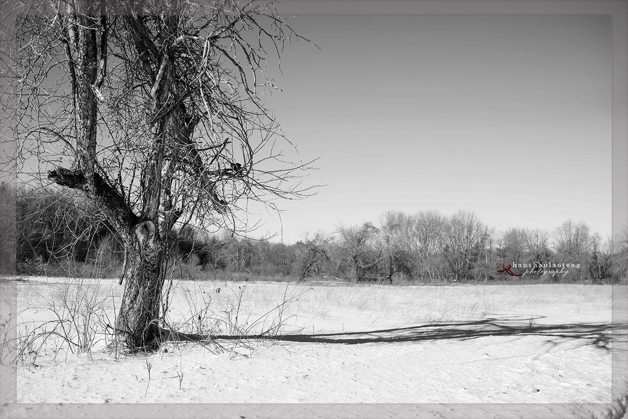 《淡入淡没》之十二  老树_图1-1