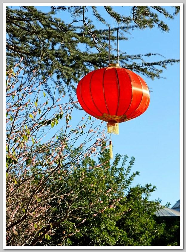 红灯笼高高挂,中国园里迎新年_图1-1