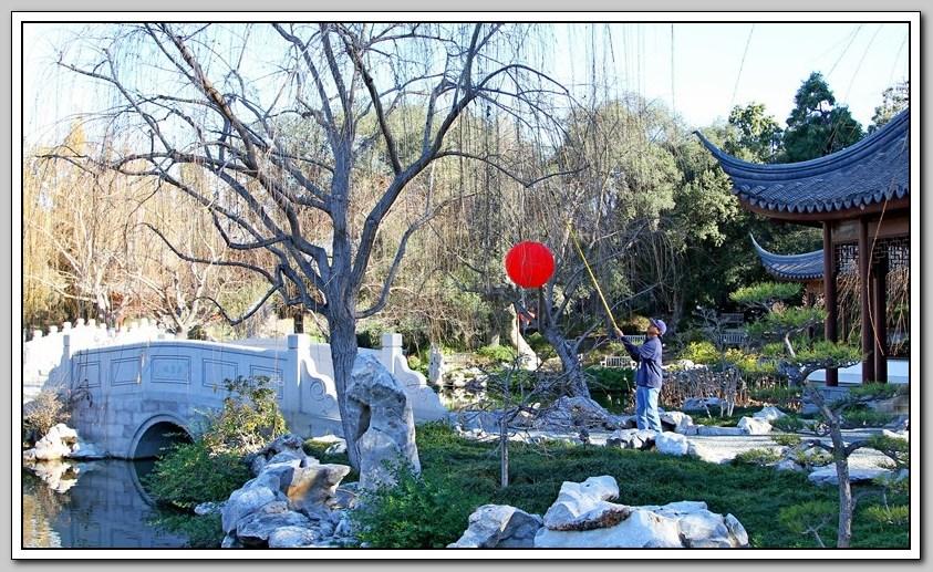红灯笼高高挂,中国园里迎新年_图1-2