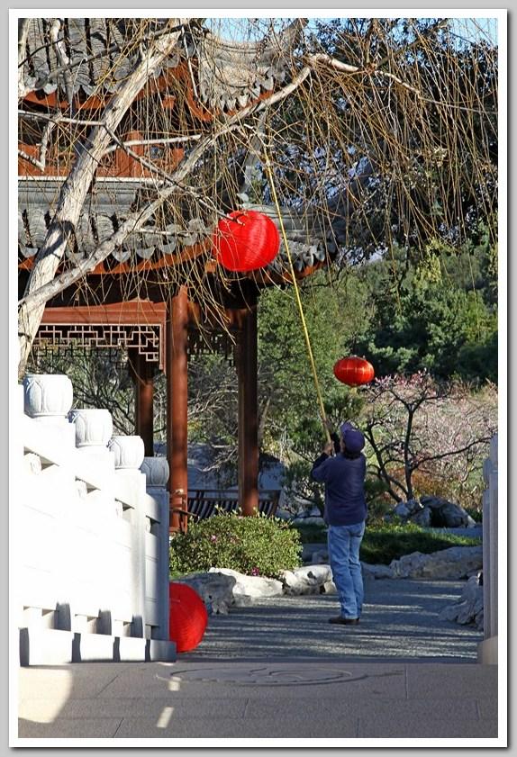 红灯笼高高挂,中国园里迎新年_图1-3