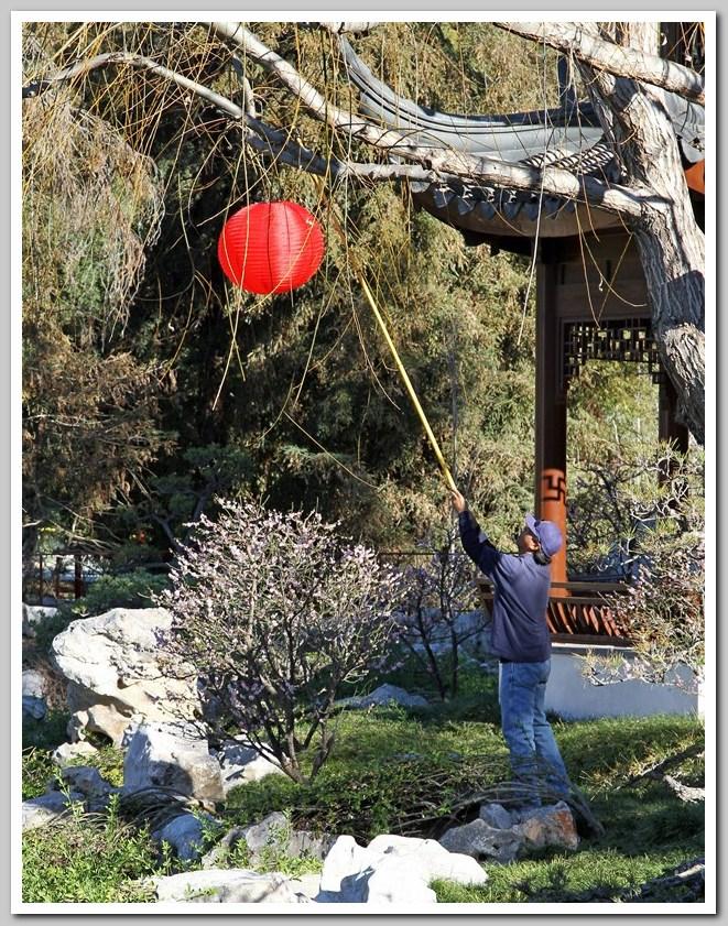 红灯笼高高挂,中国园里迎新年_图1-4