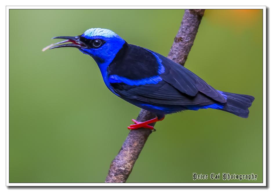 哥斯达黎加游记-珍奇异鸟_图1-21