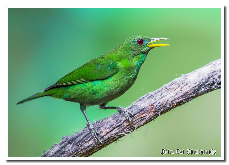 哥斯达黎加游记-珍奇异鸟_图1-25