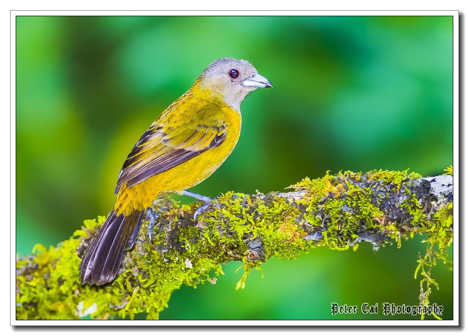美丽多姿的小鸟 - 花雕美图苑 - 花雕美图苑