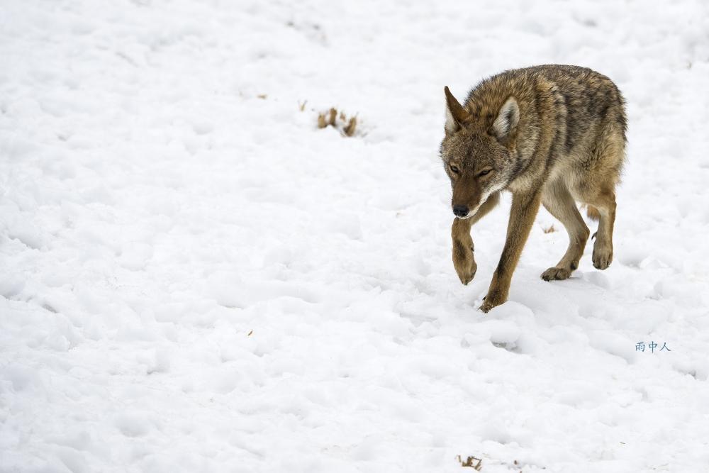 狼來了_图1-2