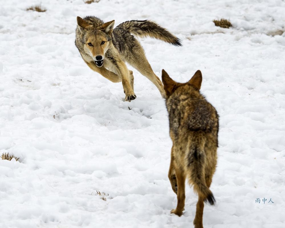 狼來了_图1-5
