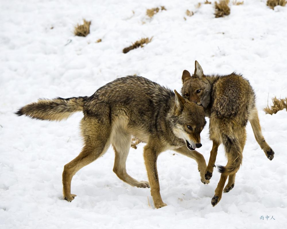 狼來了_图1-6