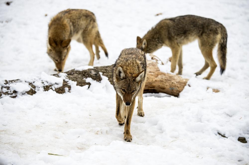 狼來了_图1-7