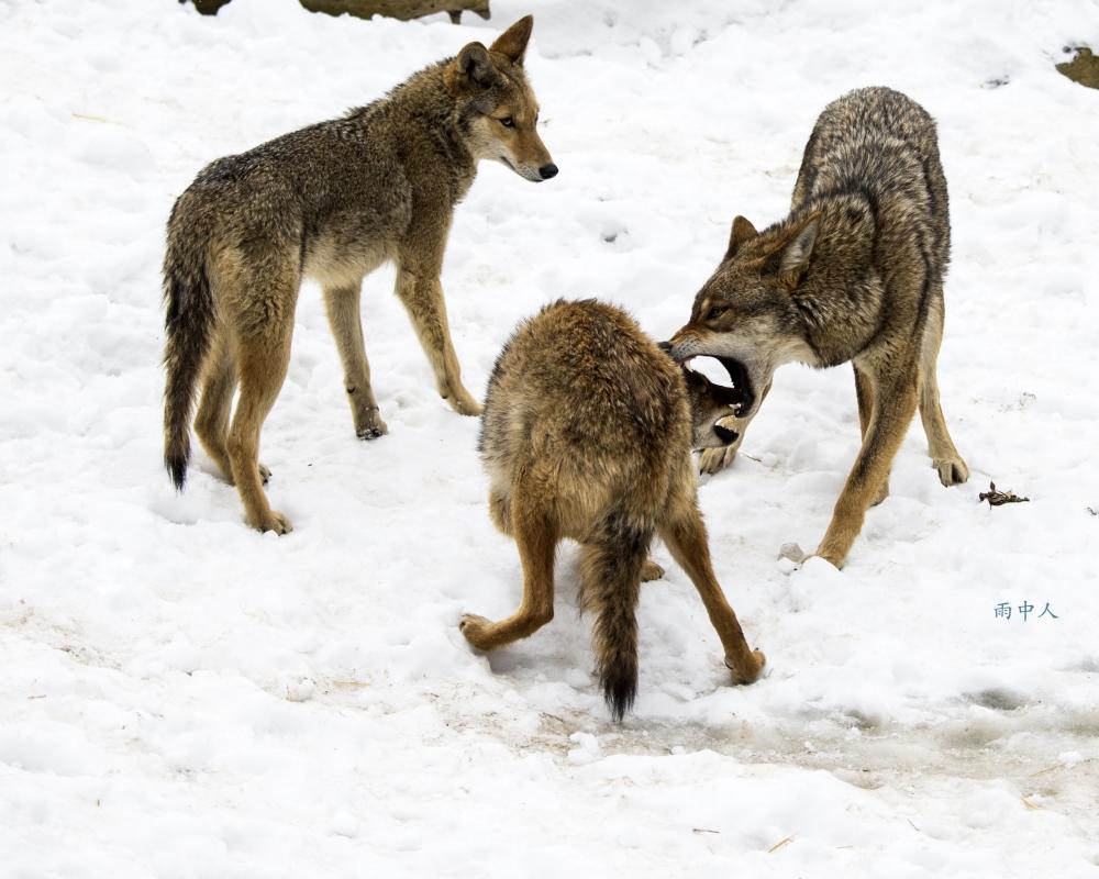狼來了_图1-8