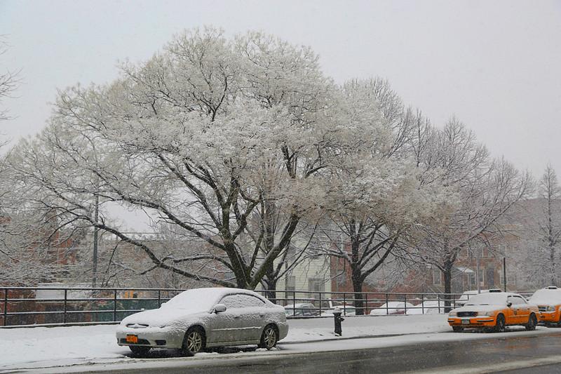 下雪走拍自家小区