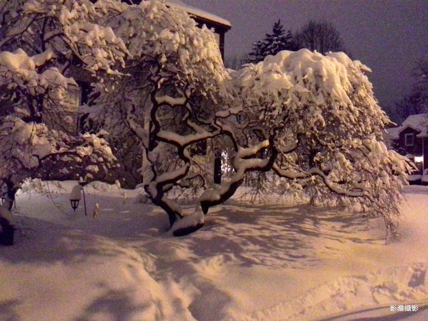 鄰家的雪景