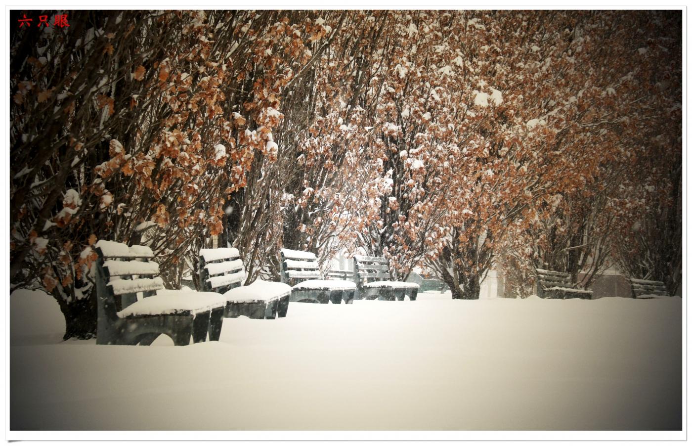 六只眼:好雪迎春来_图1-1