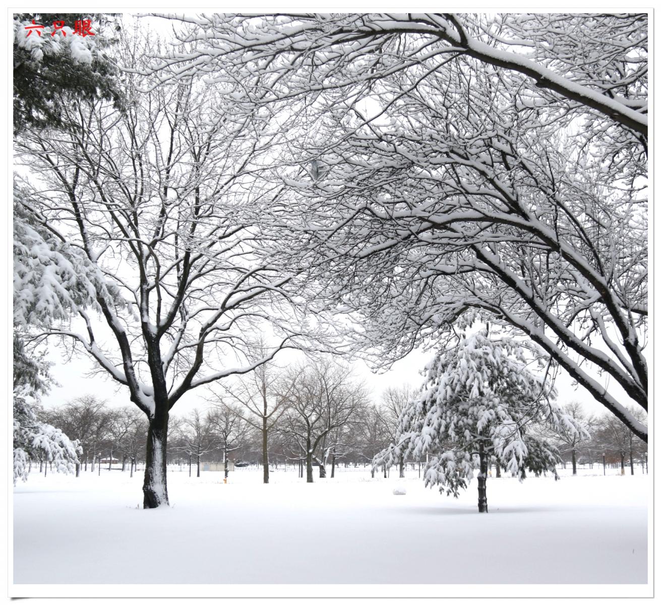 六只眼:好雪迎春来_图1-4