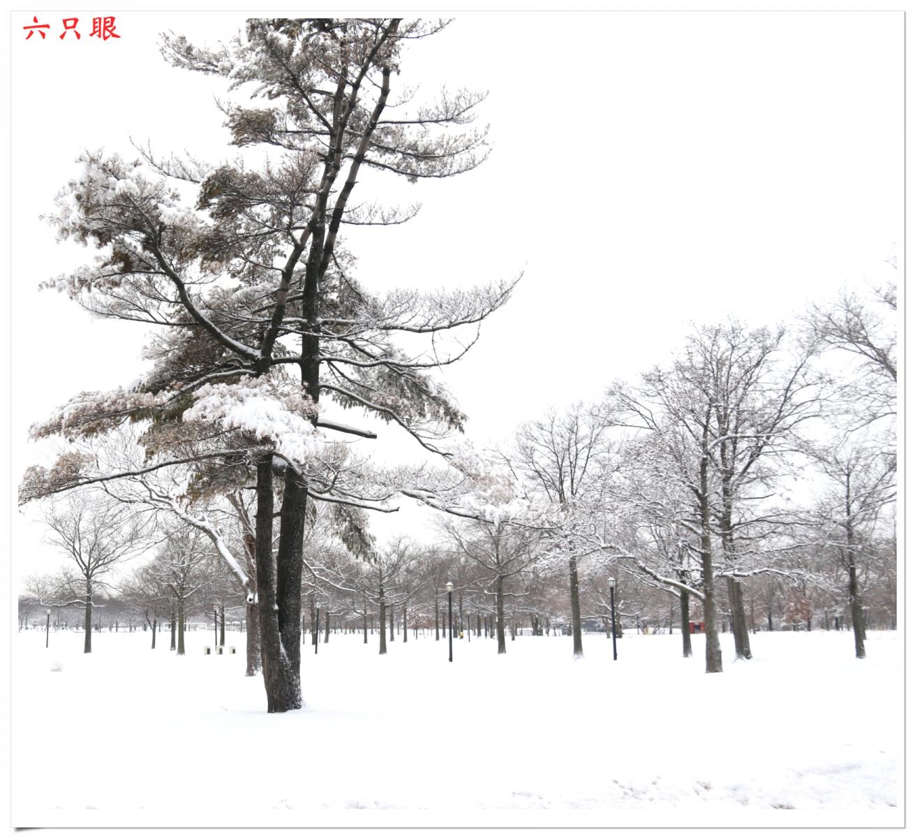 六只眼:好雪迎春来_图1-5